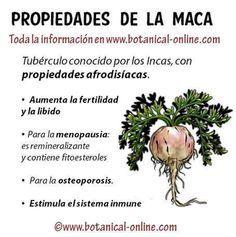 Propiedades de la maca http://www.botanical-online.com/maca_propiedades_medicinales.htm