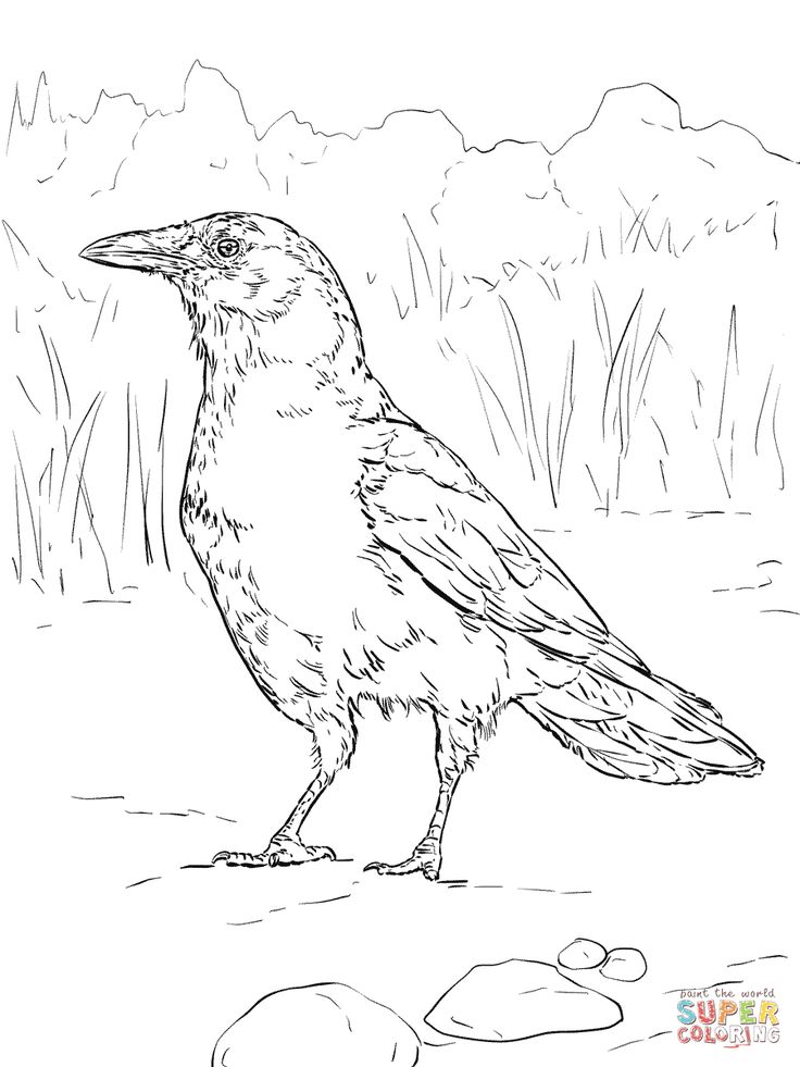 American Crow Coloring Page Realistic Sketch Coloring Page