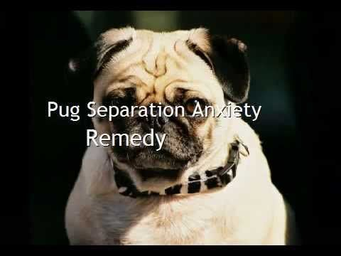 how to deal with stress at work pug