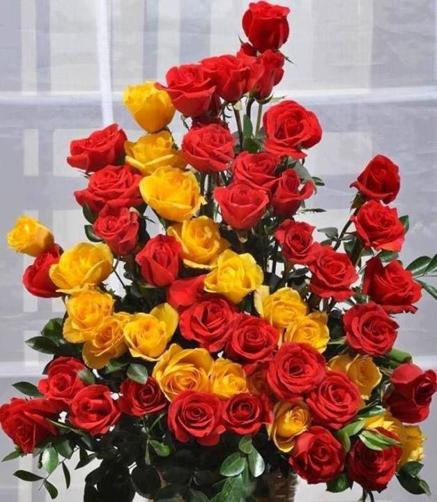 Bildergebnis für beautiful roses