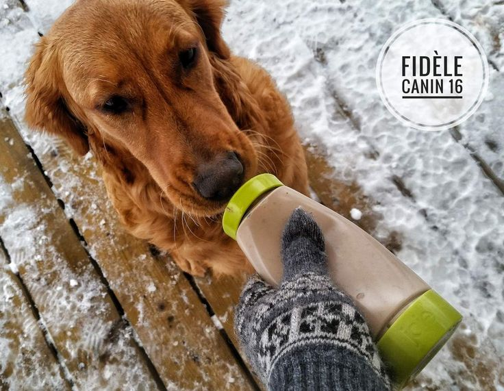AVERTISSEMENT : je ne suis pas vétérinaire, ni nutritionniste, juste un entraîneur canin qui désire partager un truc d'entraînement qui vous facilitera la vie. L'hiver est maintenant arrivé et la plupart des entraîneurs canins qui travaillent en renforcement...