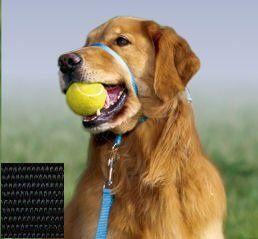 Qucik Release Dog Collar
