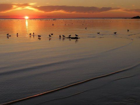 gulls resting at sunset, Rickett's Point, Victoria