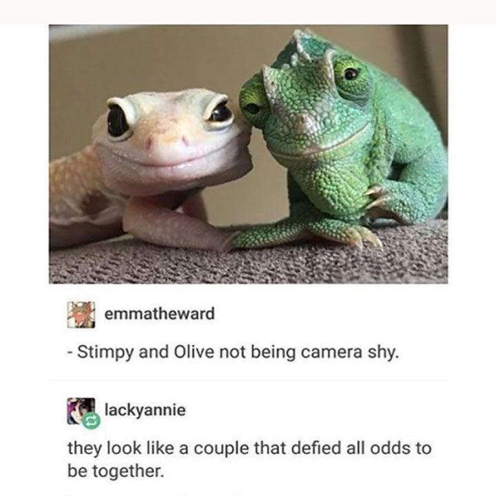 The 70 Funniest Animal Memes