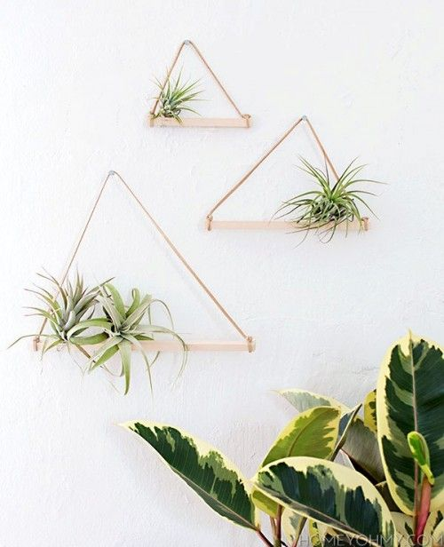 Minimalist And Easy DIY Air Plant Hangers | Shelterness