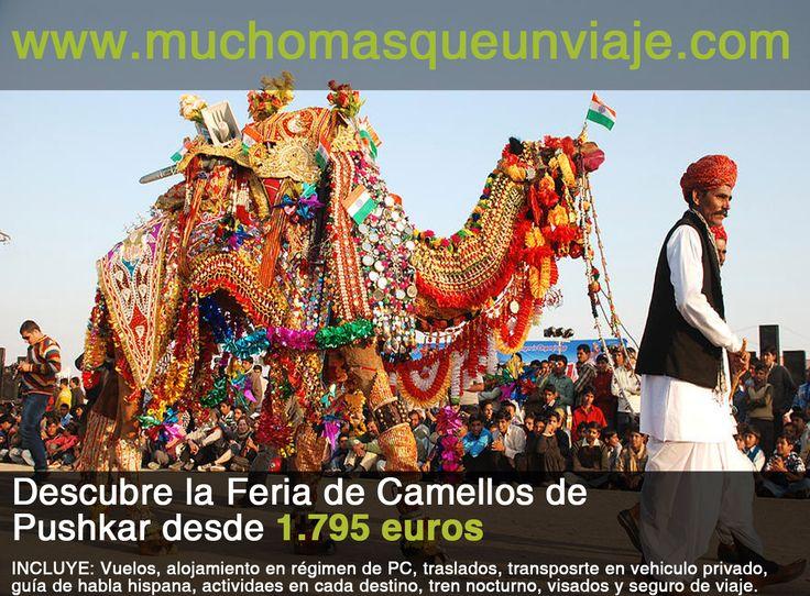 ¿Te gustaría visitar la Feria del Camello en Pushkar? Este año se realiza del 9 al 17 de noviembre. Aprovéchate de esta oferta http://muchomasqueunviaje.com/pdf/viaje-a-la-india-Feria-de-camellos-de-Pushkar.pdf