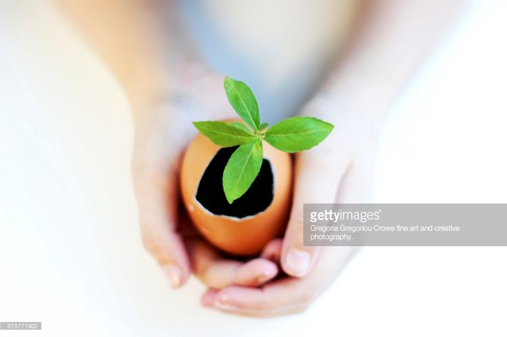 Close up of hands of young girl holding an eggshell with a seedling growing in it.