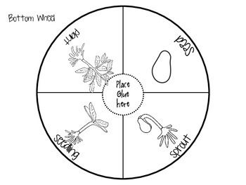 Plant life cycle wheel, cute!