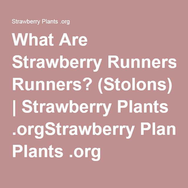 What Are Strawberry Runners? (Stolons) | Strawberry Plants .orgStrawberry Plants .org