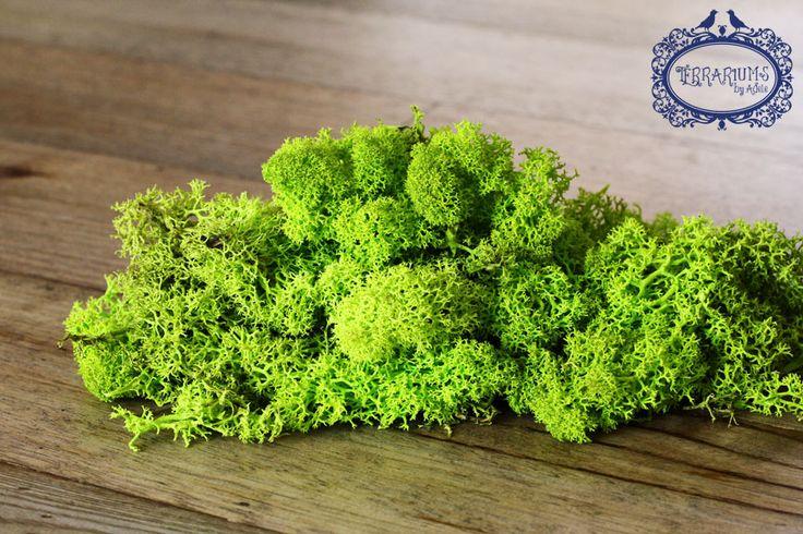 Preserved Reindeer Moss to brighten up a terrarium. Follow us on Facebook.