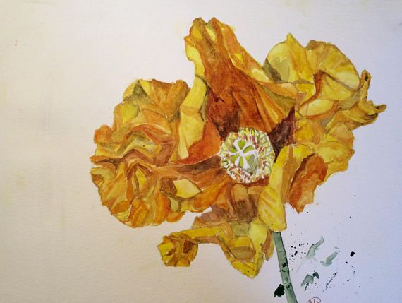 ORIGINAL DRAWING. Study of a yellow poppy