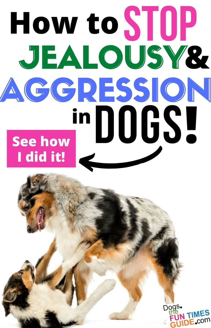 how to stop dog aggression towards humans