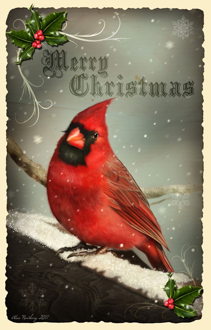 166 Best A CARDINAL CHRISTMAS Images On Pinterest