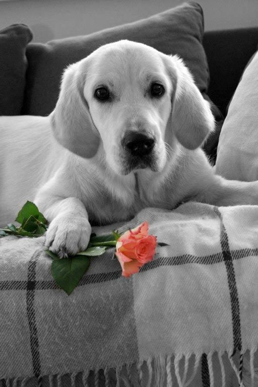 A great photo--such a lovely dog