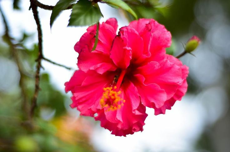 #Flor #guadalajara