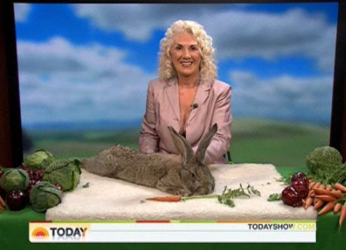 Darius, a Continental Giant rabbit, has won the Guinness World Record for being the world's largest rabbit.