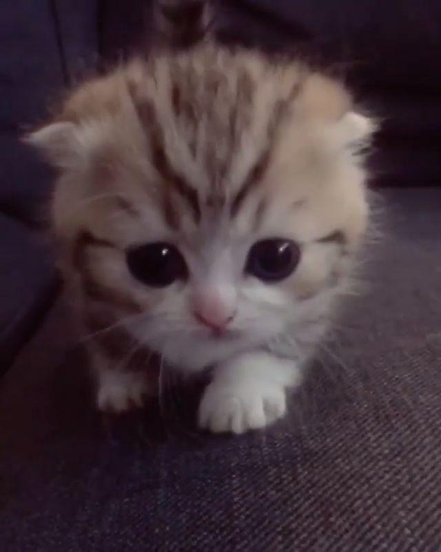 Nettes kleines Gesicht – cooles Kratzbaumhaus – süße Tiere