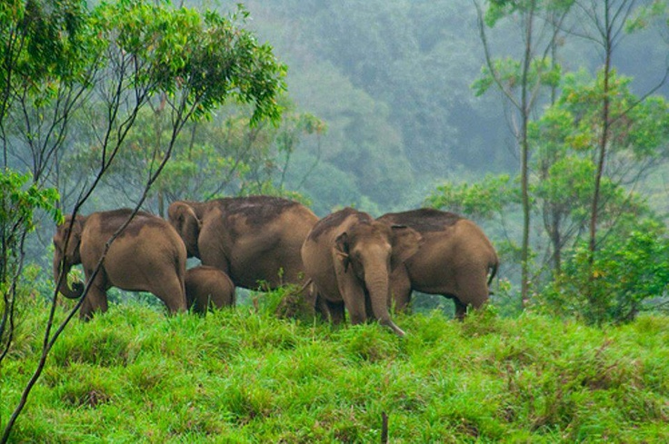 One Family: Conner Boards, Favorite Places, Eco Tourism, Tourism Places, Elephants Obsession, Kerala Tourism Munnar, Kerala Tourismmunnar, Gavi Eco, Kerala India