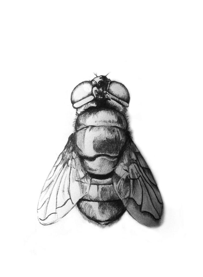 Mosca, Fly Grafico sobre papel