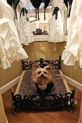 super cute doggie bed