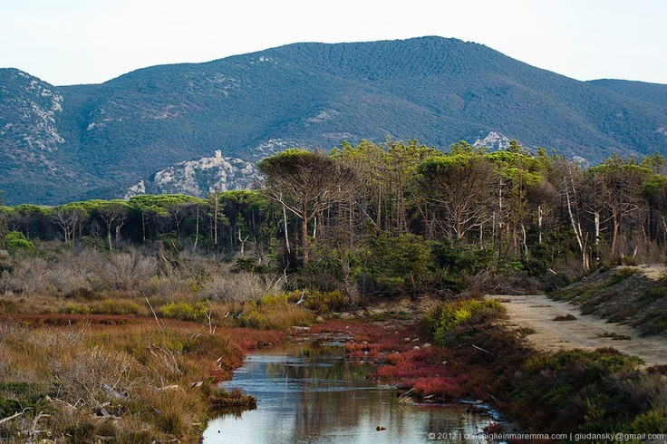 The unique landscape behind the beaches and sea in Maremma Tuscany.