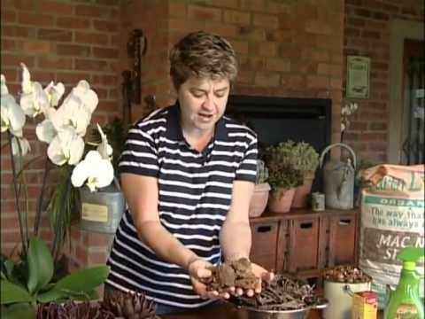 Tanya Visser & cool gardening tips.