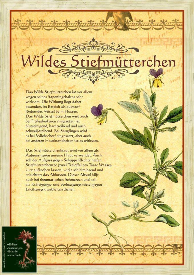 Die 25+ Besten Ideen Zu Stiefmütterchen Pflanzen Auf Pinterest ... Garten Stiefmuetterchen Ratgeber Pflanzen