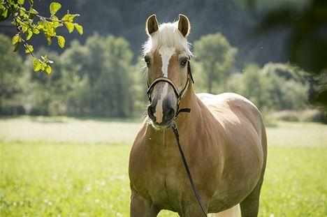 Mia Mattsson-Mercer: Hästen som ville fortsätta med sin medicinering