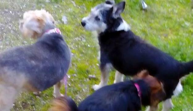 Tempio+Pausania,+Servono+volontari!+Persona+auto+munita,+amante+dei+cani,+per+un+servizio+occasionale+di+trasporto.