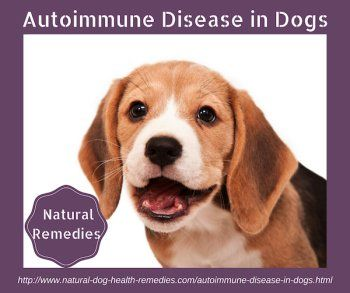 Use natural remedies to help tackle autoimmune disease in dogs.