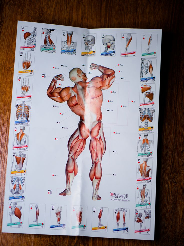 https://flic.kr/p/CVtAgh | 8 Muscle Playing Card - uniqe product from japan | playing card from japanese shop: roundflat.jp/  more anatomy products on: muscleskinsuit.com/