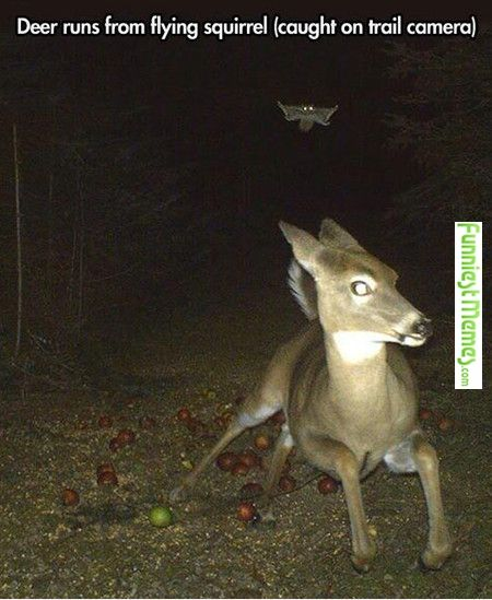 8b9e141e5d466b6204d19dd7b6daef82 squirrel funny meme deer funny the 25 best funny deer ideas on pinterest deer like animals,Funny Deer Memes