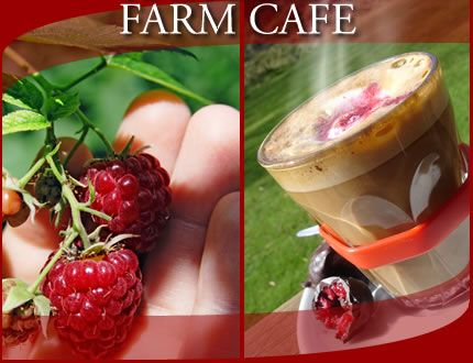 Christmas Hills Raspberry Farm Cafe, Tasmania was the first place we stopped on our roadtrip across to Strahan. Everything they serve has a hint of raspberry event the teas and coffees. I love raspberry and I love chocolate so the Raspberry Hot Chocolate was a winner! #food #foodies #Tasmania