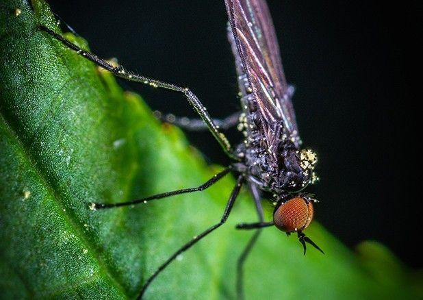 Fliegen kleine zimmer schwarze im Kleine Fliegen