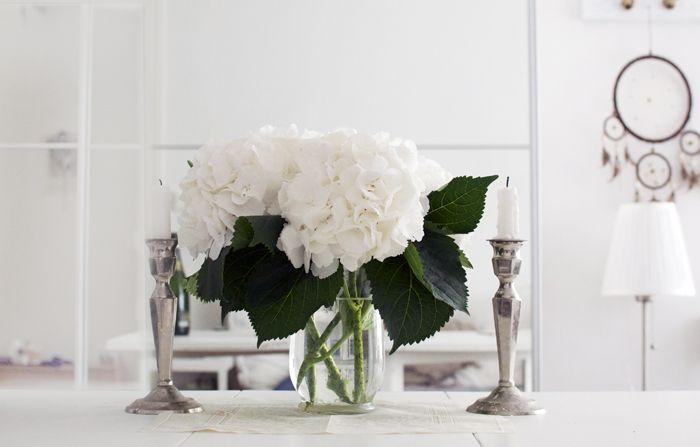 hortensia snittblomma - Sök på Google