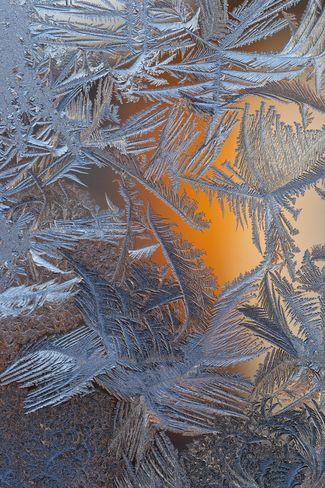 Window pane frost ferns    Posted by: Jason Kaiser // December 3, 2011  Edmonton, Alberta       via Scott Mason