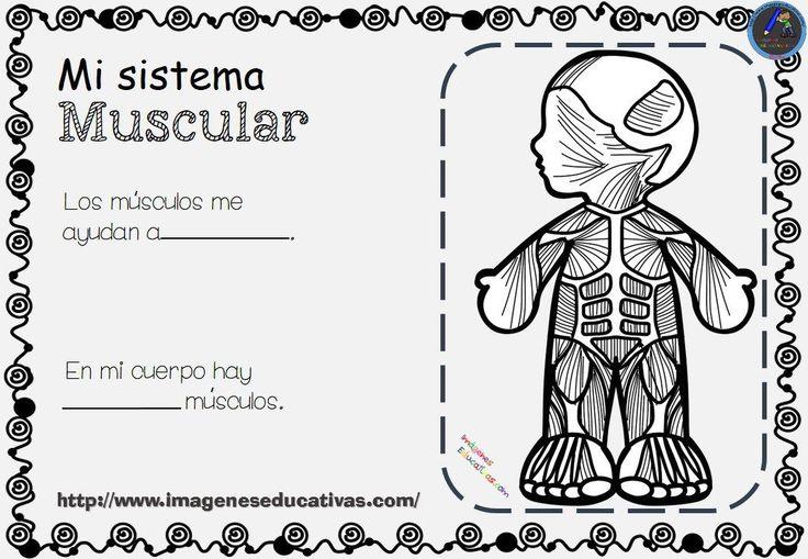 Cuadernillo cómo funciona mi cuerpo Uno de los objetivos de la etapa de educación infantil es que los niños conozcan su propio cuerpo y el de los otros, sus posibilidades de acción y que...