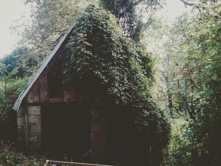 Photo:Natalia Lungu #Δομνιστα #forest #mesologgi