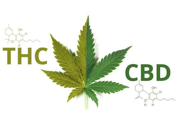 How CBD Helps The Immune System