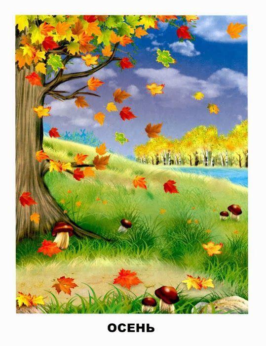 осень - листопад. клен, разноцветные листья, березовая роща, грибы jeseň