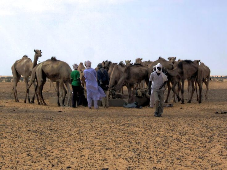 Clans bring their animals to the Forage de Mahamat, a desert well between Kalait and Kouba Olang in Chad, Central Africa.