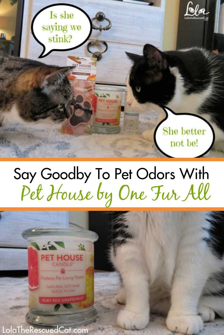 Say Goodbye To Pet Odors With Pet House By One Fur All Pet Odors