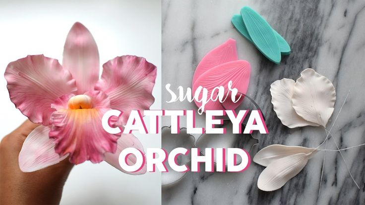 Cattleya Orchid Tutorial Cake Birthday Chocolate Food Dessert Yummy Love Baking Foodporn Swee Sugar Flowers Tutorial Flower Tutorial Cattleya Orchid