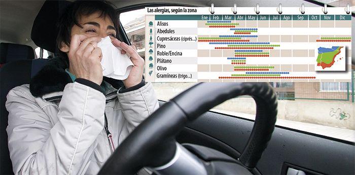 Alergico al volante y calendario de alergias