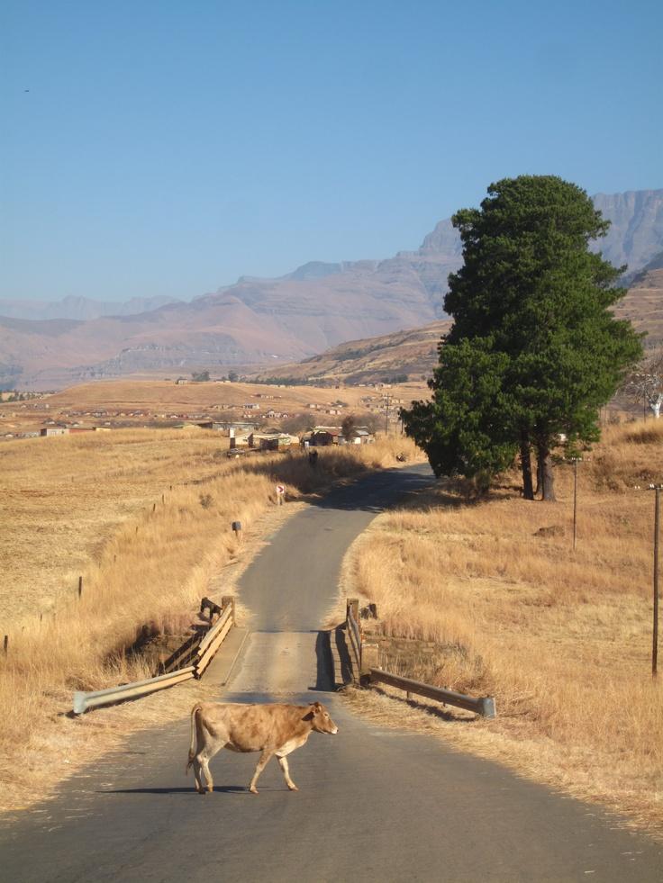 Drakensberg and the Zulu Heartlands, South Africa