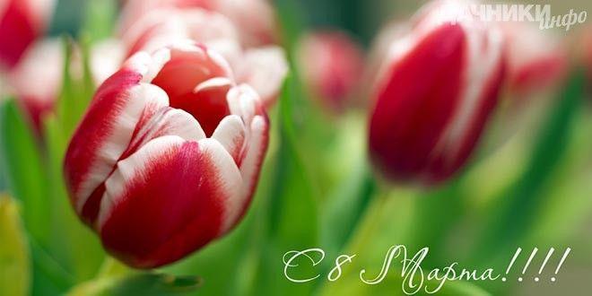 Поздравляем с 8 марта! - Подробности: http://dachniki.info/pozdravlyaem-s-8-marta-3231.html