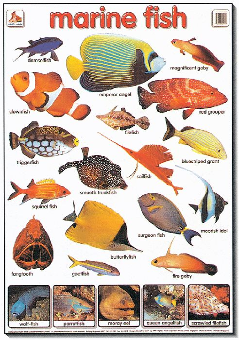 Tropical fish types google search virtual aquarium Types of fish aquarium