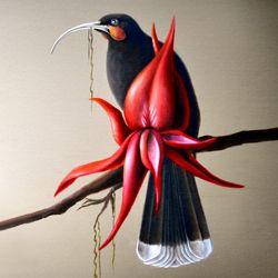 http://blog.newzealandartwork.com/wp-content/uploads/2013/07/Huia-bird-kaka-beak-flower-sofia-minson-new-zealand-artwork.jpg