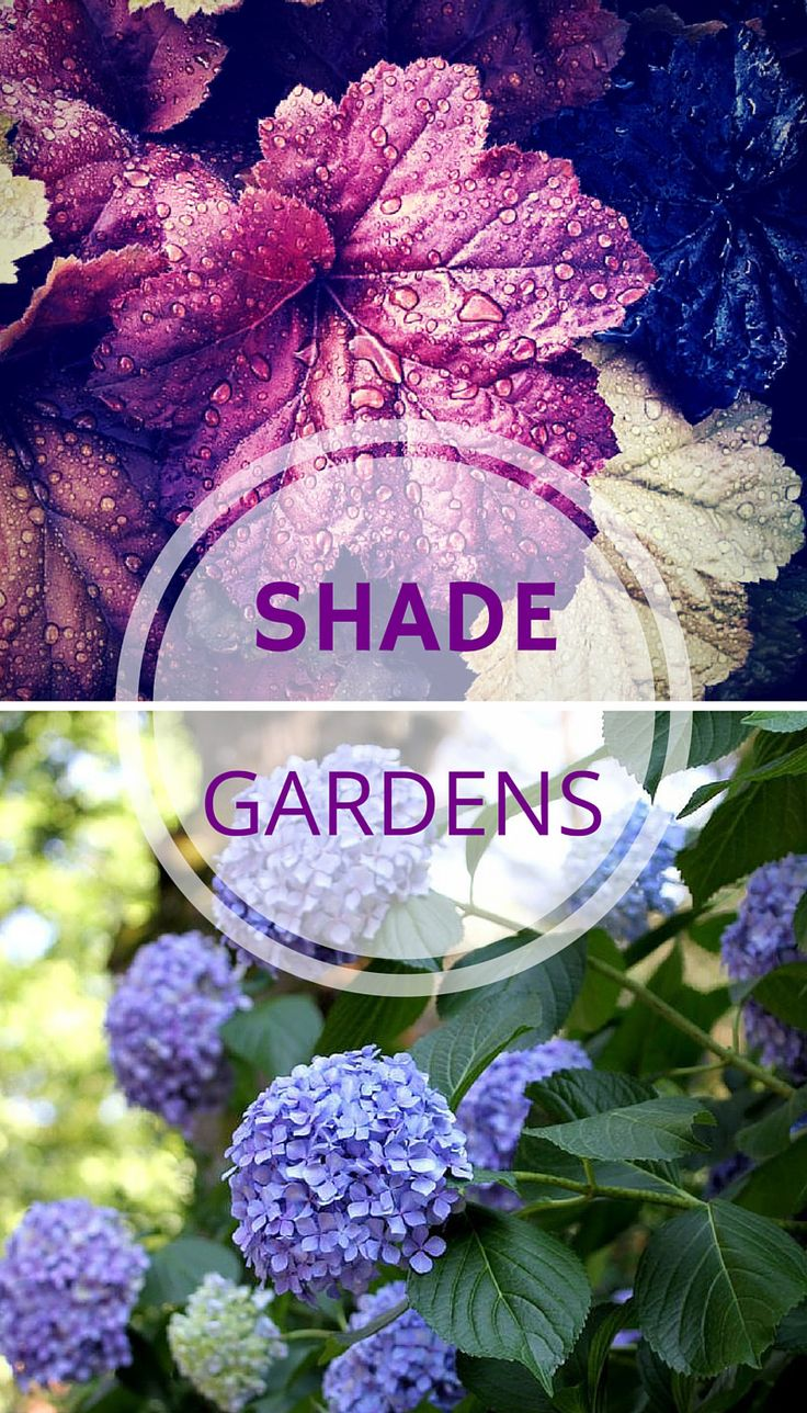 17 best ideas about plants for shade on pinterest shade - Shade tolerant flowers ...