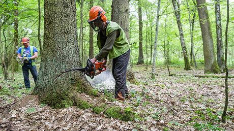 Polish loggers beat TV operator & damage equipment in forest at center of EU-Poland row https://tmbw.news/polish-loggers-beat-tv-operator-damage-equipment-in-forest-at-center-of-eu-poland-row  An operator of a Polish news channel filming in the Bialowieza Forest – currently at the center of Warsaw's row with the EU – was attacked by two loggers who knocked him over, smashed his camera, and stole memory sticks. Two suspects have been detained.Wojtkowi Zdanowicz, operator of a Polsat News TV…